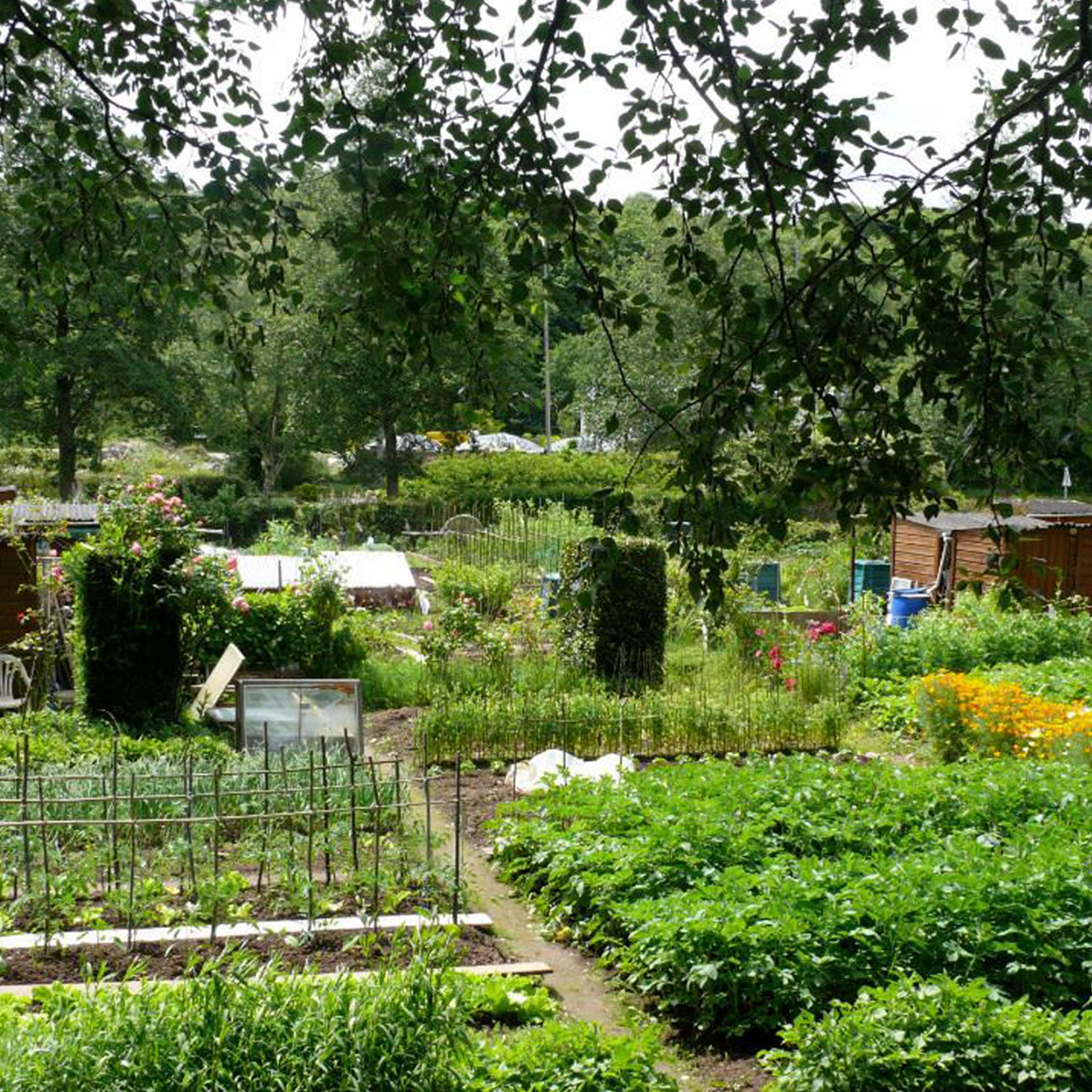 Les jardins partagés Caen ça bouge parcours balade vélo